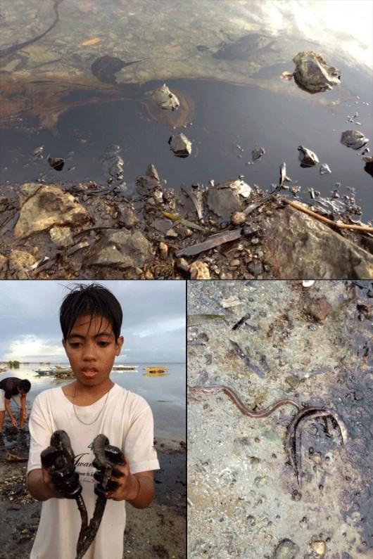 Filipiny - Ogłoszono stan katastrofy ekologicznej na wyspie Mactan, po zderzeniu z kontenerowcem zatonął prom wypełniony olejem