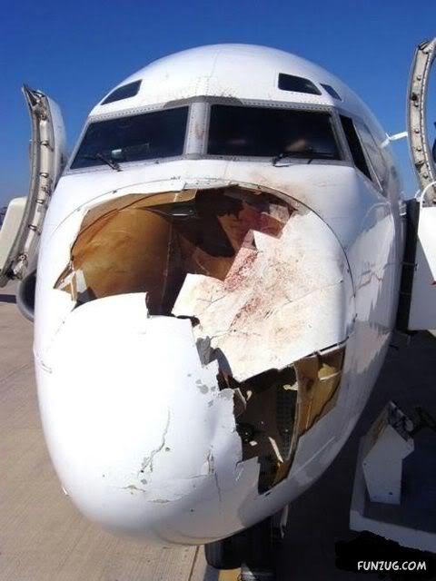 Rocznie mamy 2200 wypadków lotniczych spowodowanych przez ptaki 2