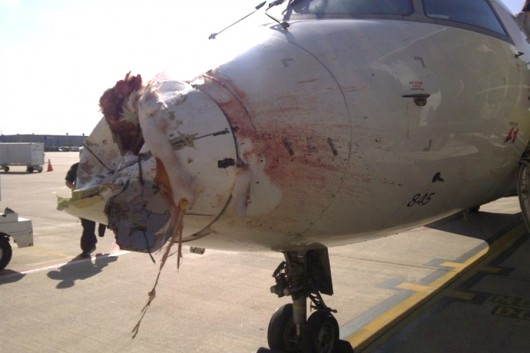 Rocznie mamy 2200 wypadków lotniczych spowodowanych przez ptaki 4