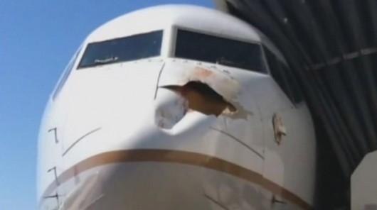 Rocznie mamy 2200 wypadków lotniczych spowodowanych przez ptaki 5