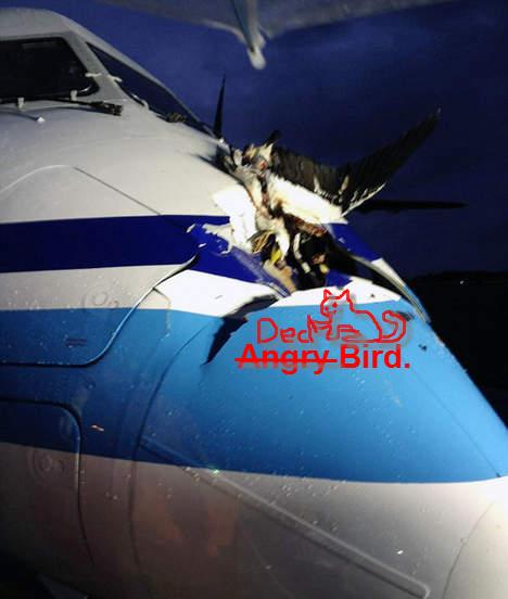Rocznie mamy 2200 wypadków lotniczych spowodowanych przez ptaki 7