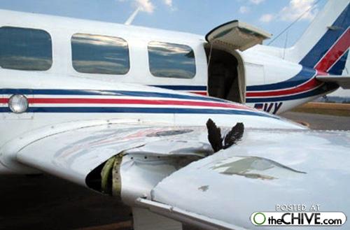 Rocznie mamy 2200 wypadków lotniczych spowodowanych przez ptaki 8