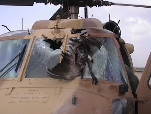 Rocznie mamy 2200 wypadków lotniczych spowodowanych przez ptaki 9