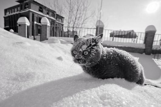 Grecja - Śnieg i kot