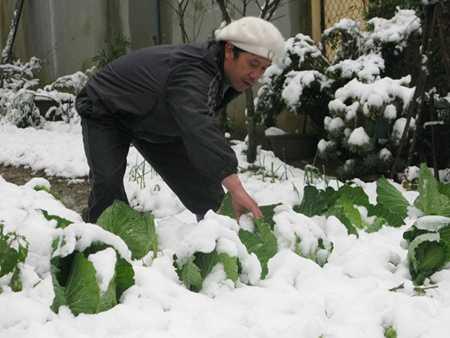 Wietnam - Śnieg 2