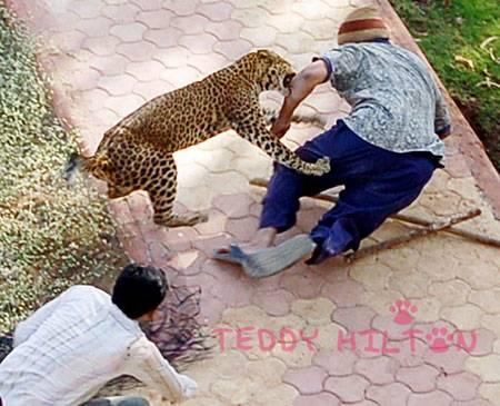 Indie - Atak leoparda 3