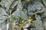 Grecja - Brudny deszcz w Atenach, winny pył znad Sahary 3