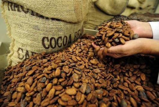 Kakao - Nasiona z owoców kakaowca