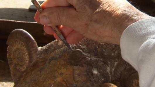 Kości dinozaura sprzed 200 milionów lat znaleziono w Luksemburgu