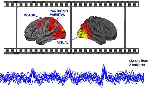 Rejony mózgu (powyżej) których sygnały (poniżej) synchronizują się pod wpływem filmu