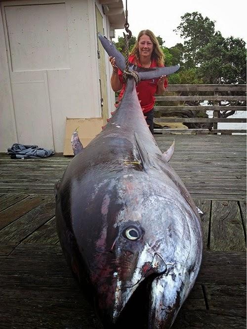 Tuńczyk 411 kg