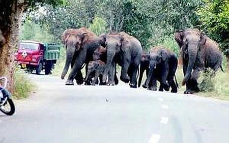 Indie - Dzikie słonie przebiegły przez wioskę niszcząc wszystko na swojej drodze 2
