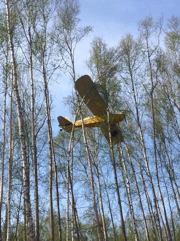 USA - Awionetka zawisła na drzewach na Alasce