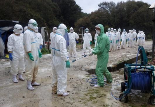 W Chinach wykryto nowy szczep wirusa ptasiej grypy H10N8