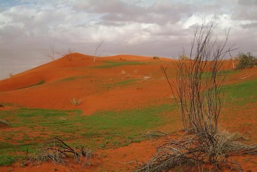 Zazielenione pustynie - Australia 2
