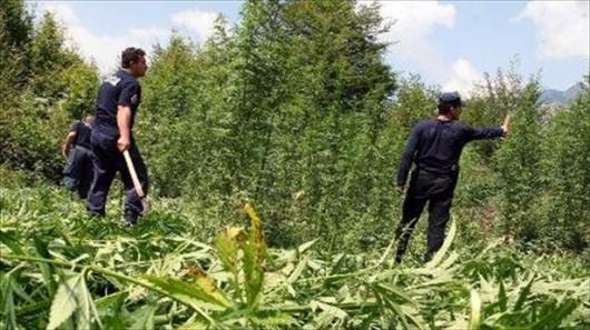 Albania - Szturm policji na wieś Lazarat, gdzie są największe plantacje konopi