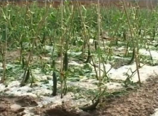Chiny - Gradobicie zniszczyło ogromną ilość upraw