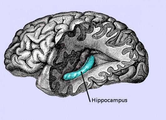 Hipokamp