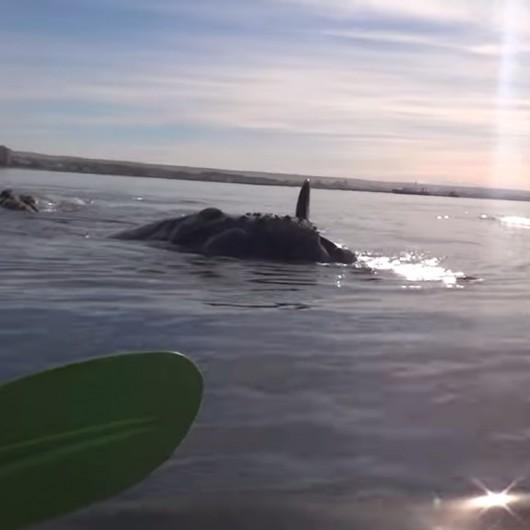 Kajak i dwoje ludzi na grzbiecie wieloryba