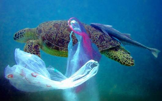 Oceaniczne śmieci