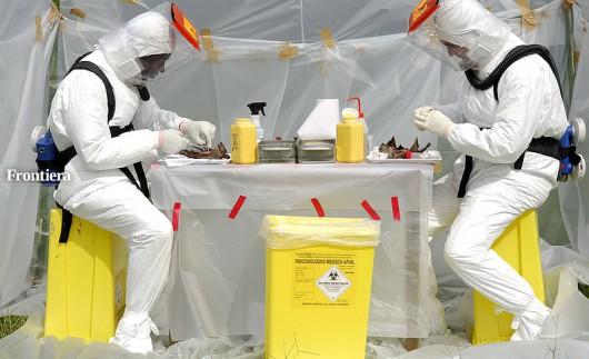 Wirus Ebola - nietoperze