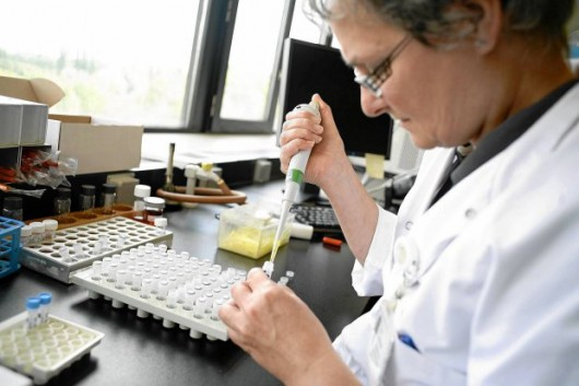Badania nad nową bakterią NDM odporną na prawie wszystkie antybiotyki prowadzone były już w sierpniu 2010 r., m.in. w Belgii - w laboratorium uniwersyteckim w Antwerpii (JORGE DIRKX AFP EAST NEWS)