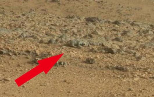 Mars - Marsjański szczur