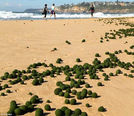 Zielone kule na plaży w Sydney 1