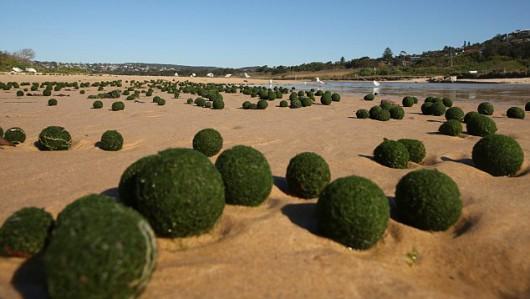 Zielone kule na plaży w Sydney 2