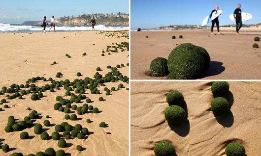 Zielone kule na plaży w Sydney 3