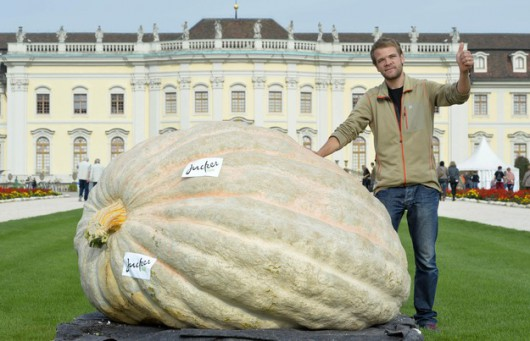 Szwajcaria - Wyhodował największą dynię na świecie, waży 1054 kg 1