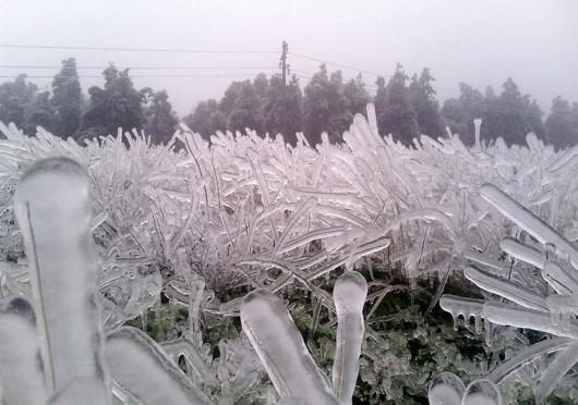 Bułgaria - Marznący deszcz uszkodził linie energetyczne, 20 tysięcy osób bez prądu