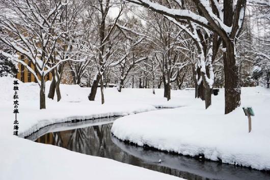 Hokkaido pod grubą warstwą śniegu 2