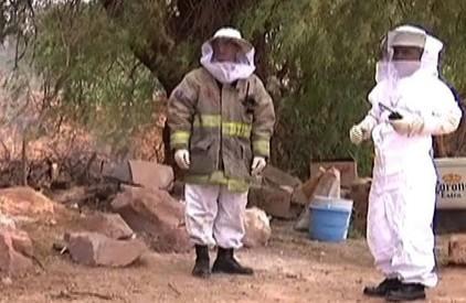 Peru - Agresywne pszczoły atakują ludzi i zwierzęta