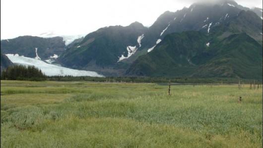 Lodowiec Pederson w 2005 roku - Alaska