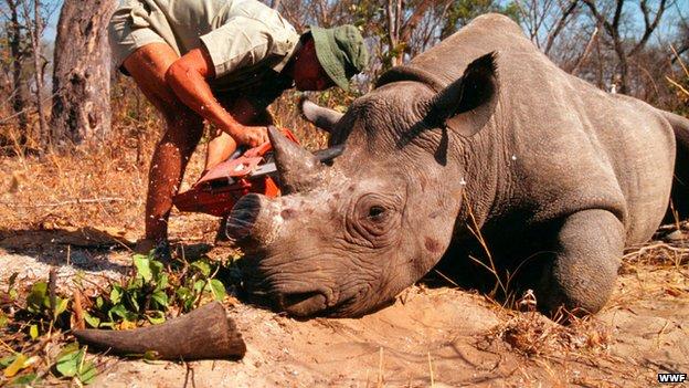 RPA - W 2014 roku zabito rekordowo dużo nosorożców, szacuje się, że zginęło co najmniej 1200 osobników