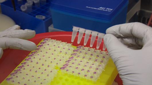 Wirus ebola zmutował