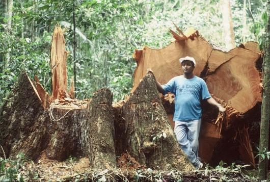 Brazylia - Policja zatrzymała największego złodzieja lasów 1