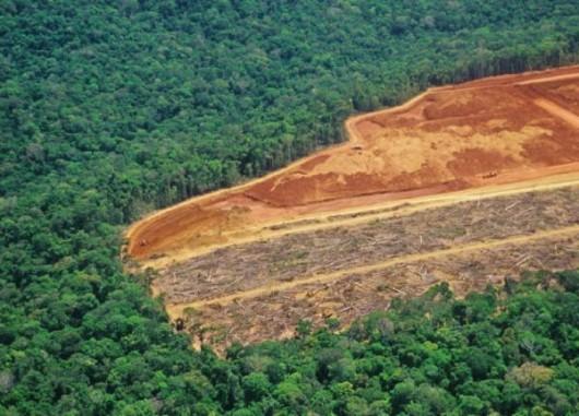 Brazylia - Policja zatrzymała największego złodzieja lasów 3