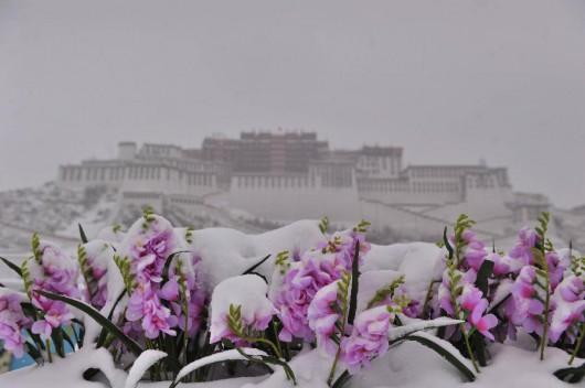 Chiny - Duże opady śniegu w Tybecie, od 17 lat nie spadło tyle białego puchu
