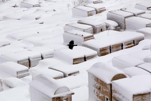 Izrael - Jerozolima pod wyjątkowo grubą warstwą śniegu 8