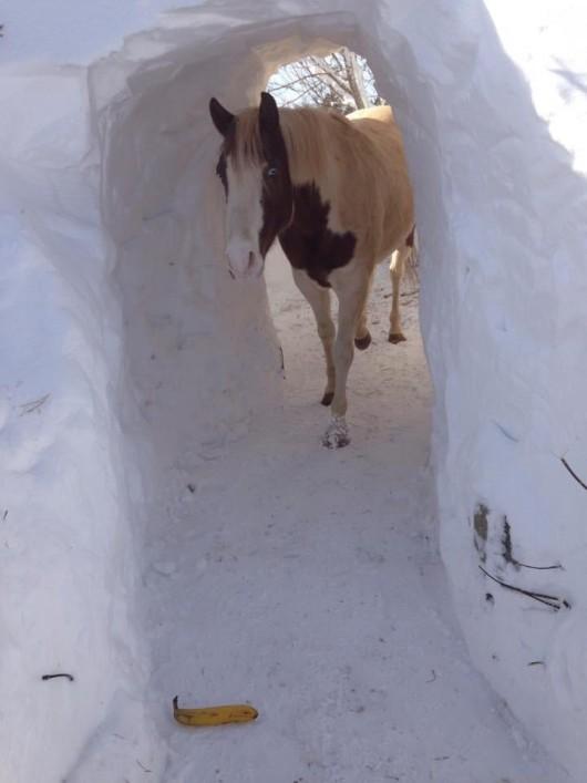 Kanada - Ogromne ilości śniegu na Wyspie Księcia Edwarda 5