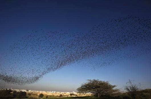 Piękne ptasie struktury na izraelskim niebie 5