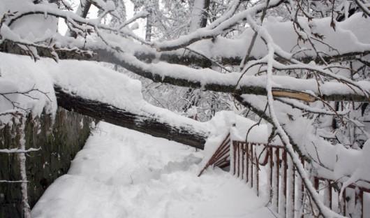 Bułgaria - Śniegu coraz więcej, prawie 70 tysięcy gospodarstw bez prądu 4