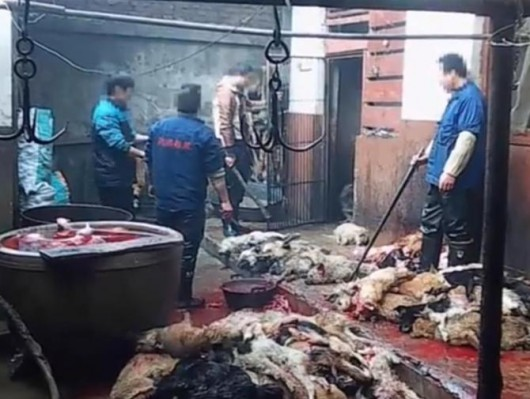 Drastyczna kampania przeciwko przemysłowi skórzanemu w Chinach