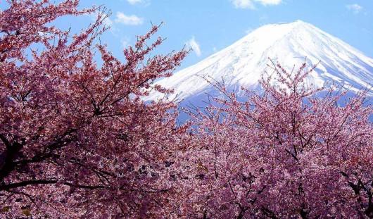 Japonia - Kwitną wiśnie 4