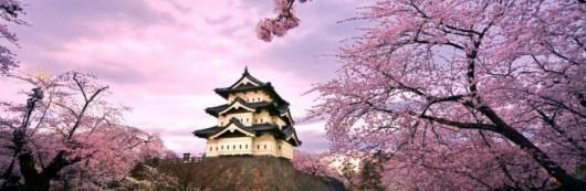 Japonia - Kwitną wiśnie 6
