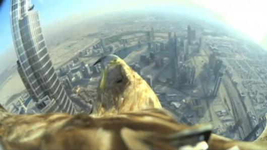 ZEA - Orzeł z kamerą nad Dubajem