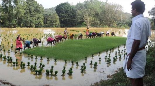 Indie - Z powodu ogromnych deszczy, które niszczą uprawy, siedmiu rolników dziennie popełnia samobójstwo