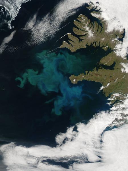Kwitnienie fitoplanktonu u wybrzeży Islandii